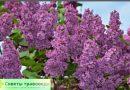 Растения, которые используют при остеохондрозе позвоночника